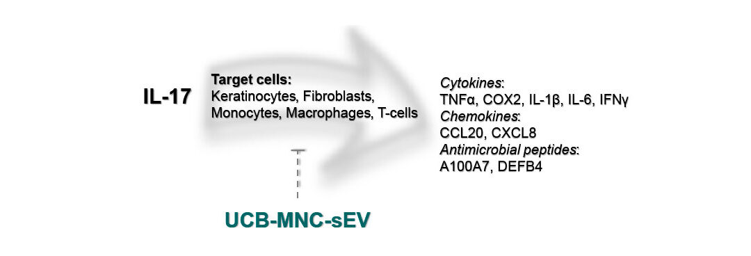 Putative mechanism of action of UCB-MNC-sEV (or Exo-101), which is likely to be mediated by the IL-17 axis.